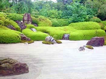 日本庭園スギゴケ